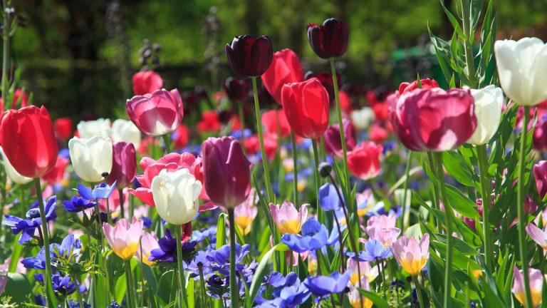 Lemo Gartendesign | Herbst-Neuheiten ab jetzt verfügbar