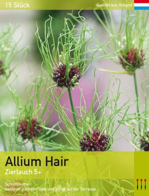 Allium Hair