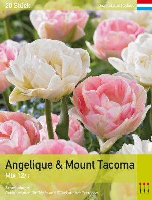 Angelique & Mount Tacoma