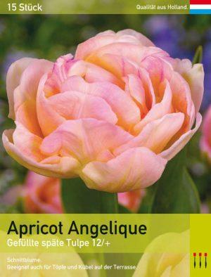 Apricot Angelique