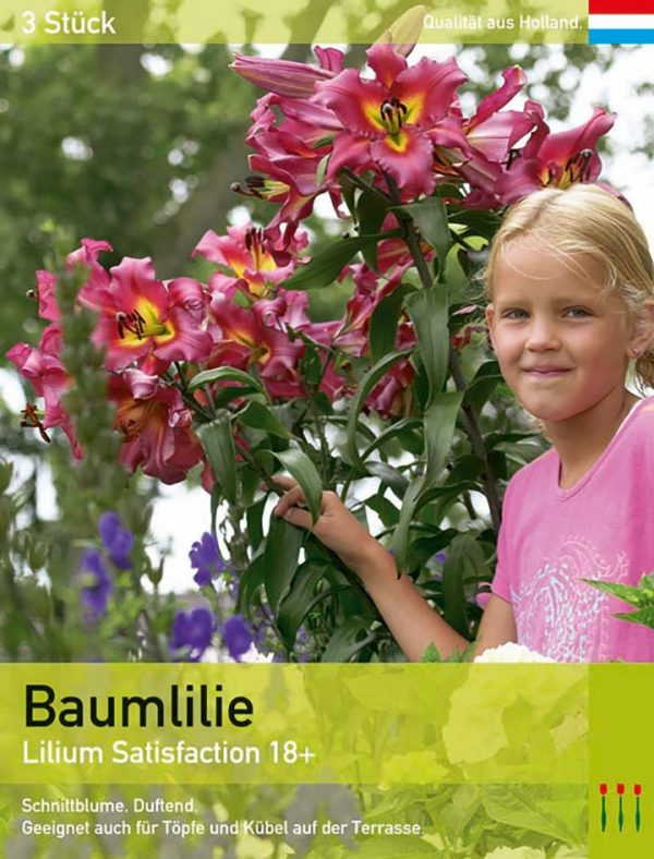 Baumlilie 'Satisfaction'
