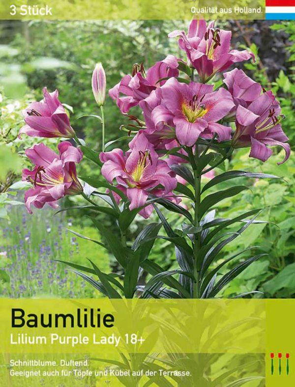 Baumlilie 'Purple Lady'
