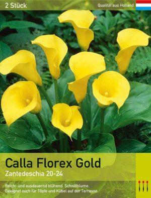Calla 'Florex Gold'