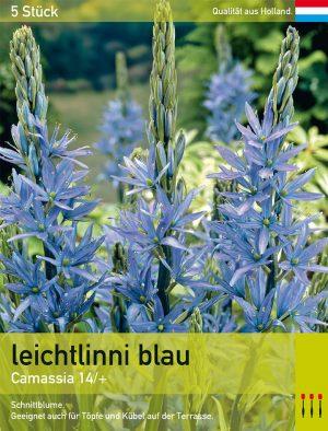 Camassia leichtlinii