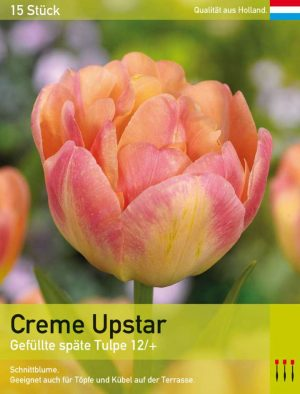 Creme Upstar