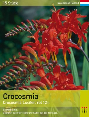 Crocosmia 'Luzifer'