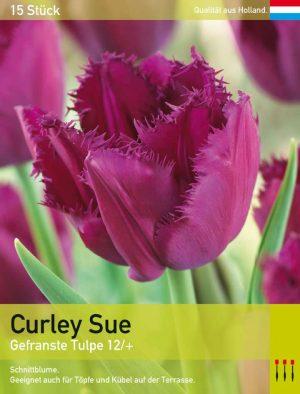 Curley Sue