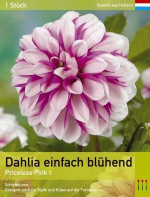 Dahlie'Priceless Pink'