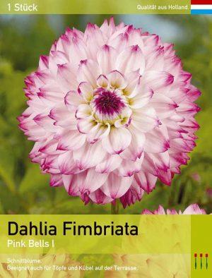 Dahlie'Pink Bells'
