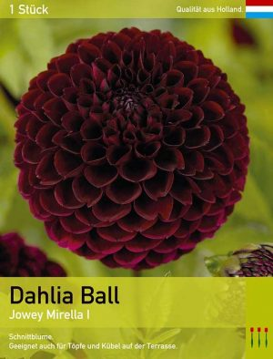 Dahlie 'Jowey Mirella'