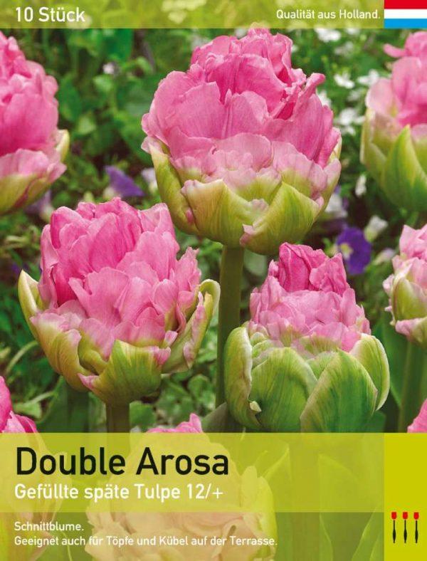 Double Arosa