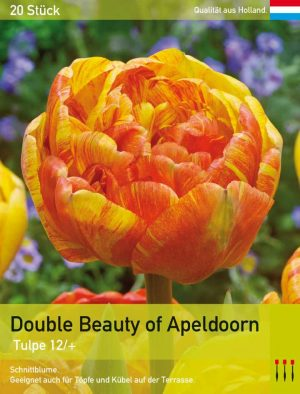 Double Beauty of Apeldoorn