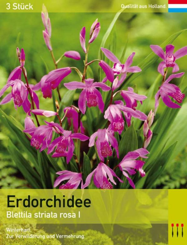 Erdorchidee