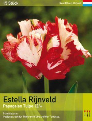 Estella Rijnveld