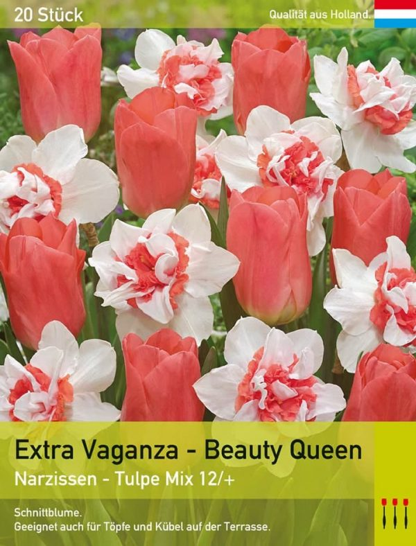 Extra Vaganza - Beauty Queen