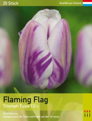 Flaming Flag