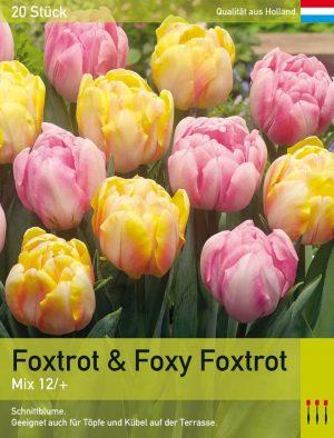 Foxtrot & Foxy Foxtrot