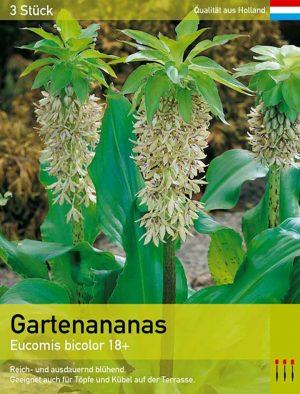 Gartenananas bicolor