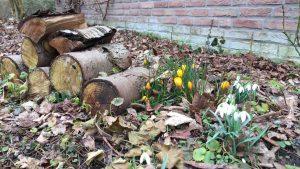 Lemo Gartendesign | Erste Frühlingsblüher