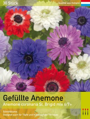 Gefüllte Herbstanemone 'St. Brigid mix'