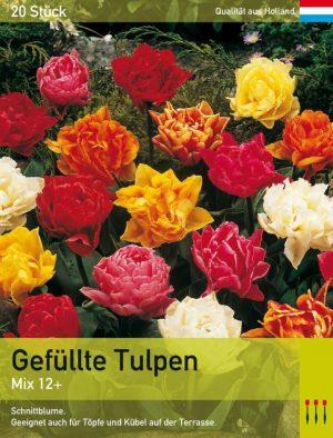 Gefüllte Tulpen mix