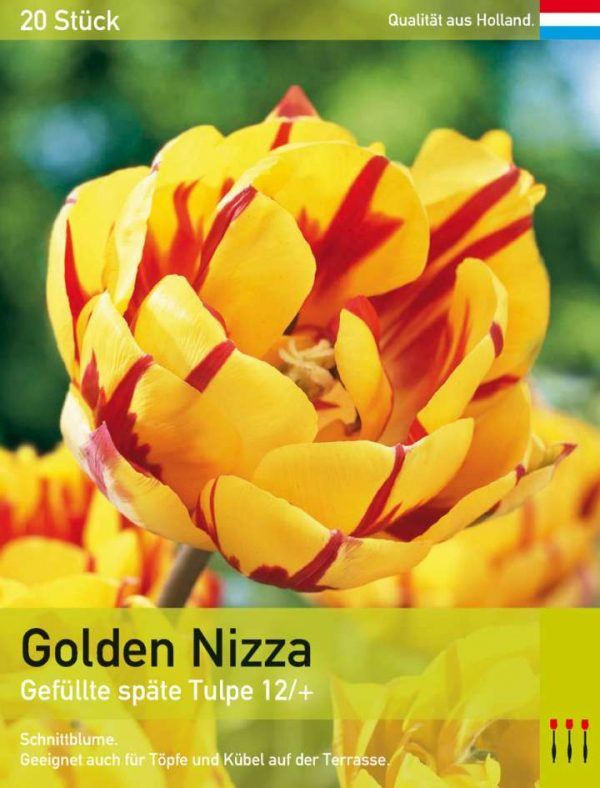 Golden Nizza