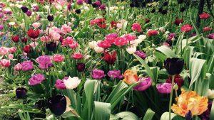 Lemo Gartendesign | Unsere Pflanztipps für einen farbenfrohen Garten