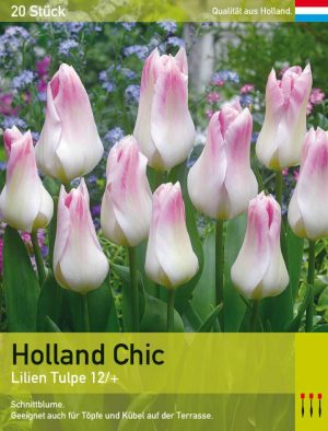 Holland Chic