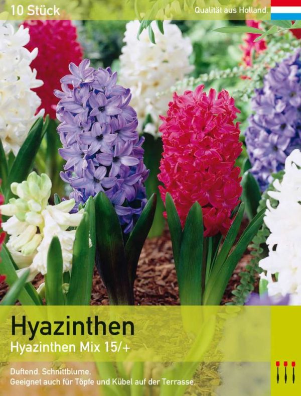 Hyazinthen Mix
