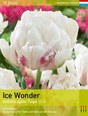 Ice Wonder