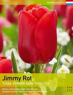 Jimmi Rot