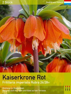 Kaiserkrone Rot