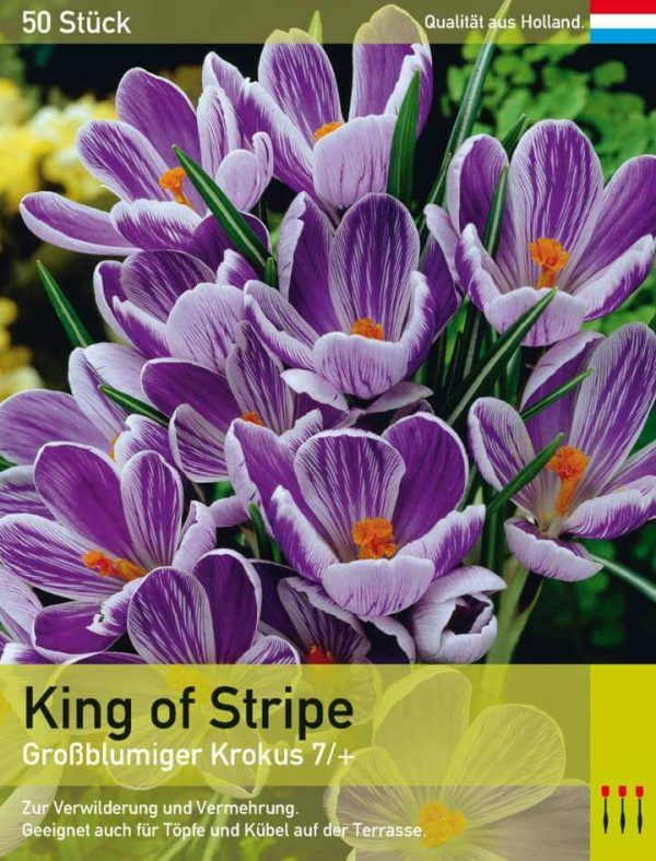 King of Stripe