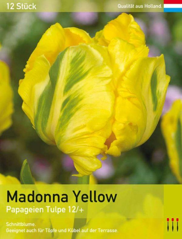 Madonna Yellow