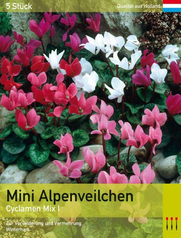 Mini Alpenveilchen MIx