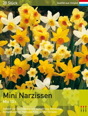 Mini Narzissen Mix