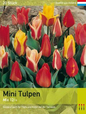 Mini Tulpen Mix