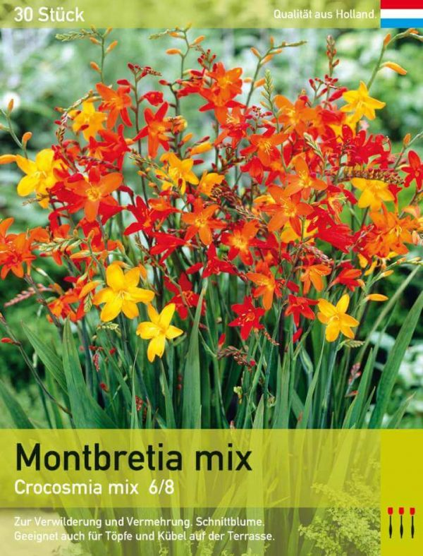 Montbretia mix