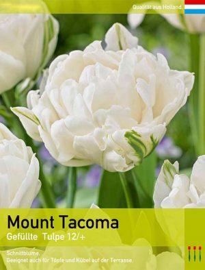 Mount Tacoma