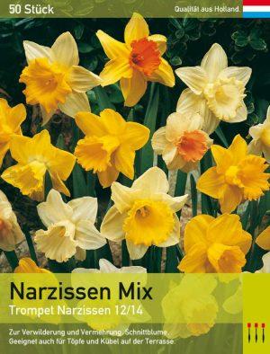 Narzissen Trompet Mix