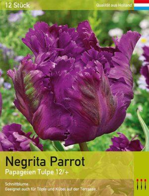 Negrita Parrot