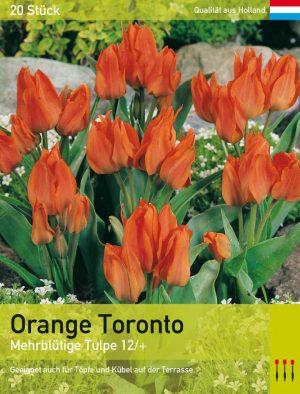Orange Toronto