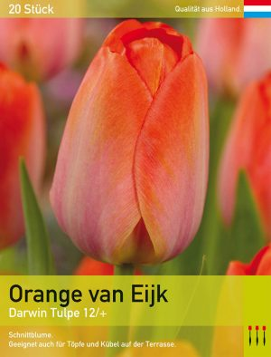 Orange van Eijk