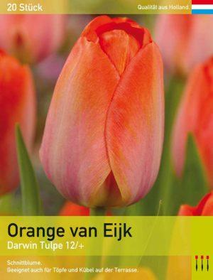 Orange van Eijk