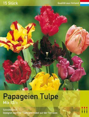 Papageien Tulpen  Mix
