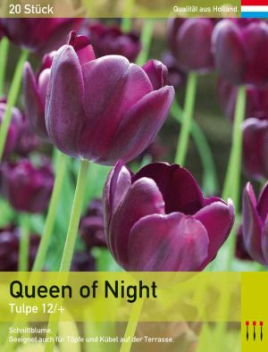 Queen of Night