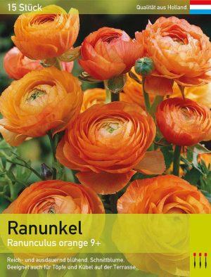 Ranunkel (Asiatischer Hahnenfuß) orange