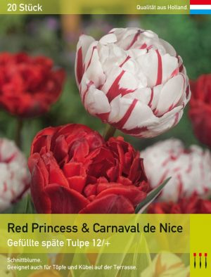 Red Princess & Carnaval de Nice