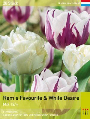 Rem's Favourite & White Desire