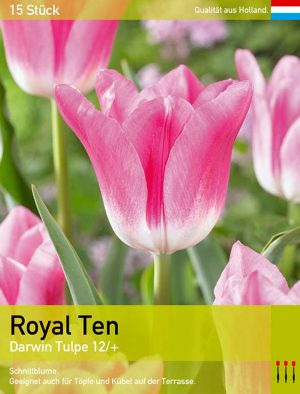 Royal Ten